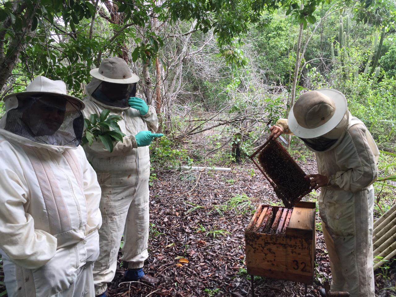 almar-beehive-red-propolis-openned.jpg