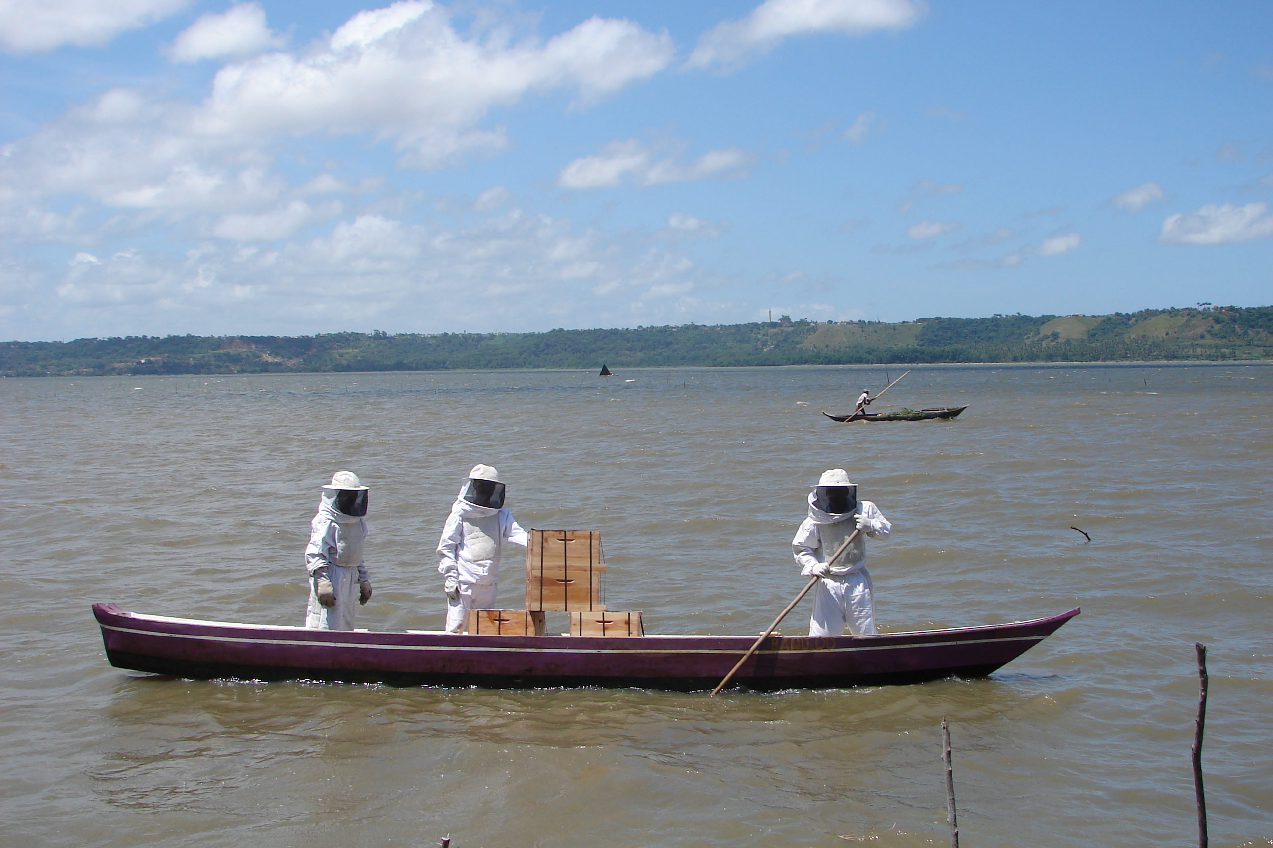 apicultura-144.jpg