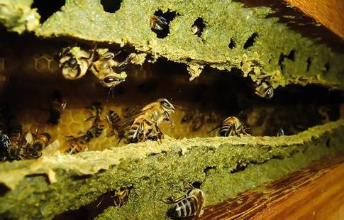 green-propolis-hive-minas-gerais.jpg