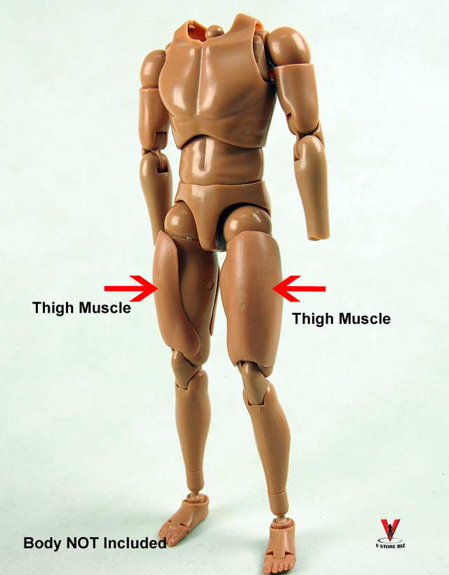 1/6 Scale Thigh Muscle