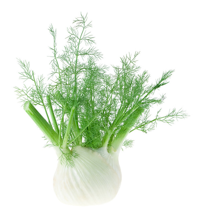 Fennel, grown for both its bulbs and its fern-like leaves.