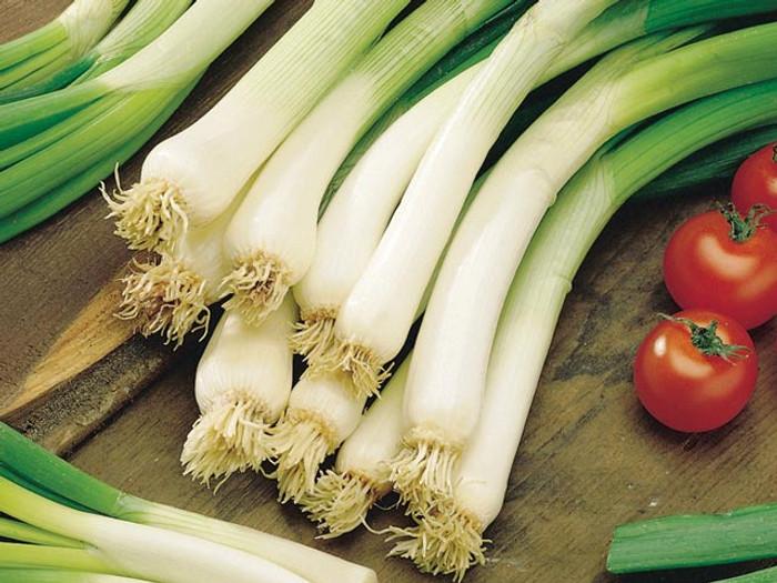 Onion - Evergreen Hardy OG