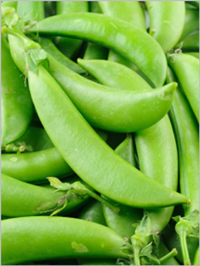 Peas - Sugar Snap OG