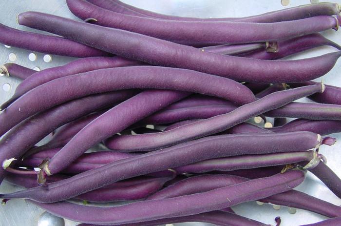 Beans - Royalty Purple OG