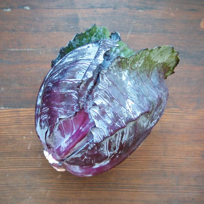 Cabbage - Red Express OG