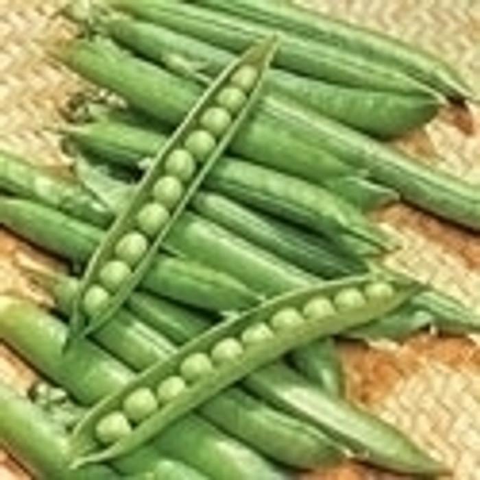 Peas - Green Arrow (Shell) OG