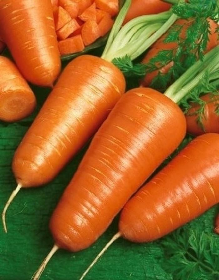 Carrots - Chantenay Red Core OG