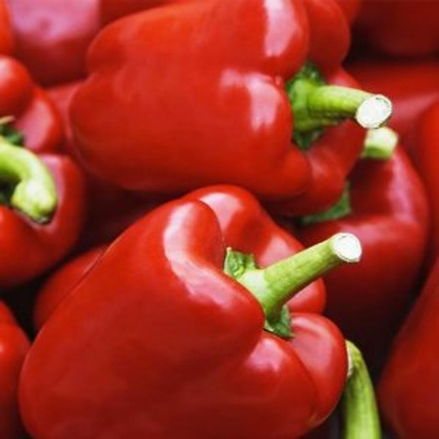 Pepper - King of the North (sweet) (short season)