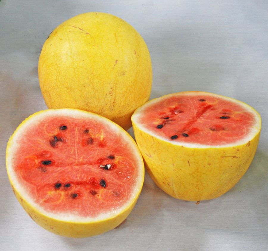 Image result for golden midget watermelon