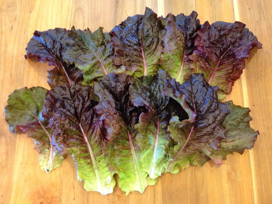 Lettuce - Outredgeous Red OG