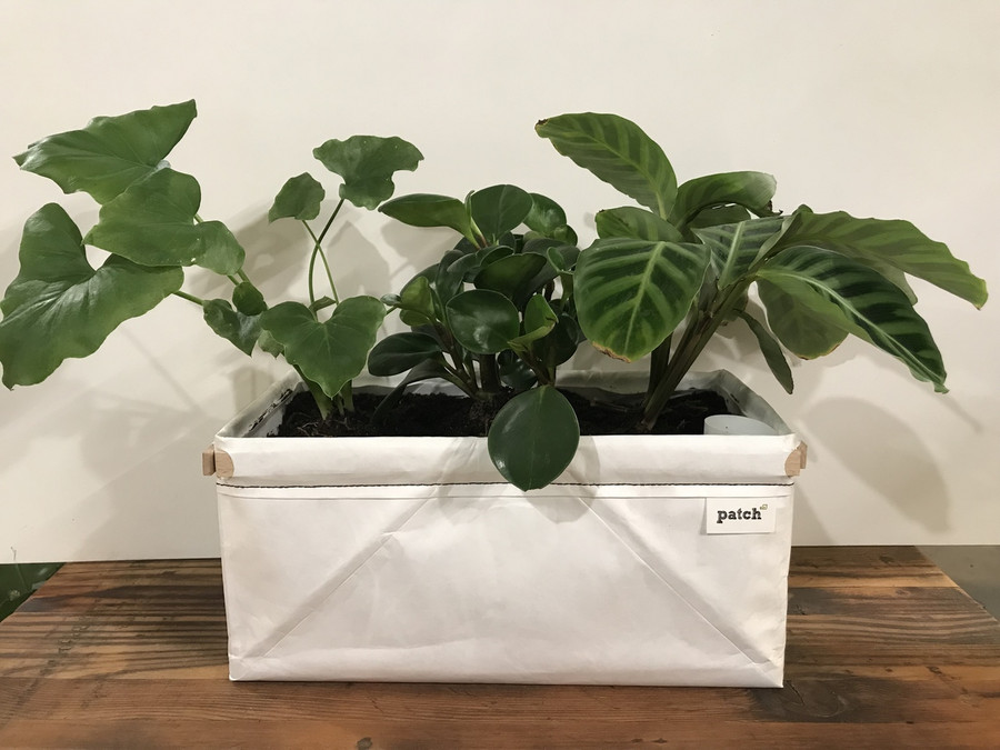 Great for houseplants as well!