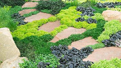 walkway plants
