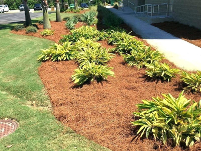 Landscaping with pine straw