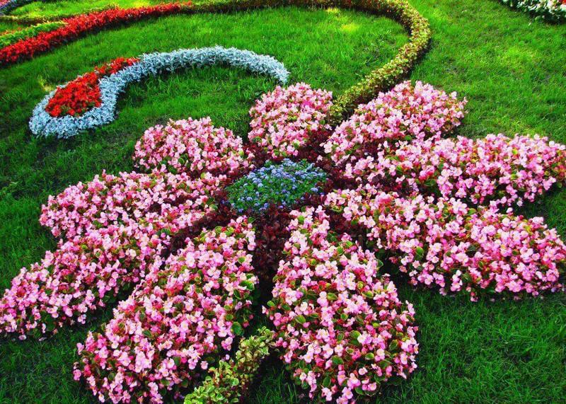 Buy flower bulbs online perennial flower bulbs flowers blooming mightylinksfo