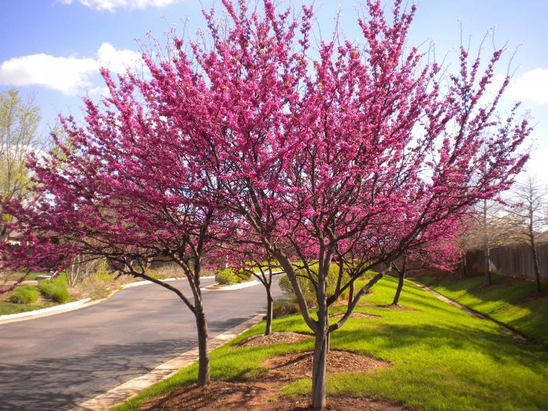 Nurseries Offer The Best Quality Trees & Plants