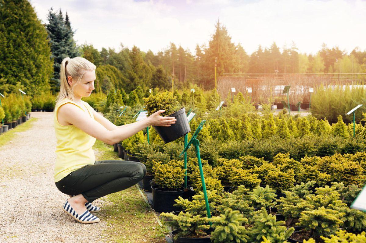 Tree Seedlings - Start your Nursery