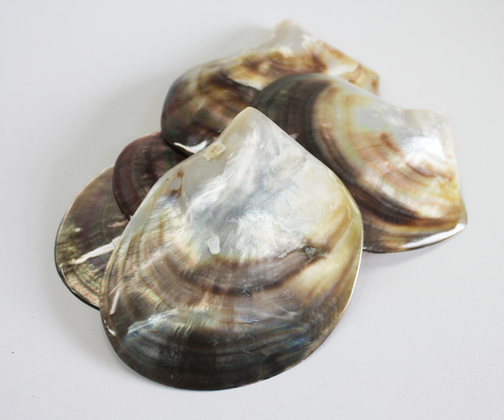Black Lip Mother Of Pearl Shells Shell Crafts