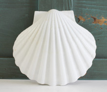 Giant Irish Scallop Shell