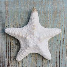 Jungle Starfish Glitter Ornament
