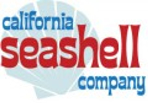 California Seashell Company