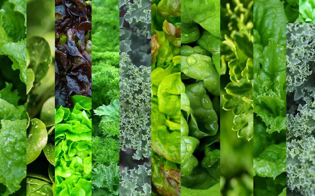 Importance of Organic Raw Green Superfoods