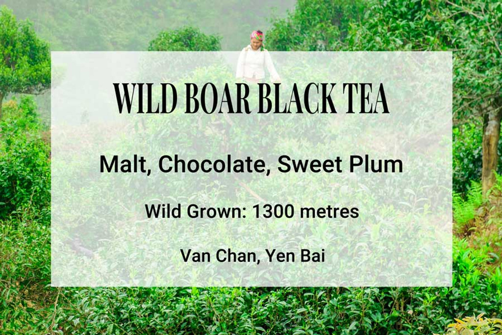 Wild Boar Black Tea