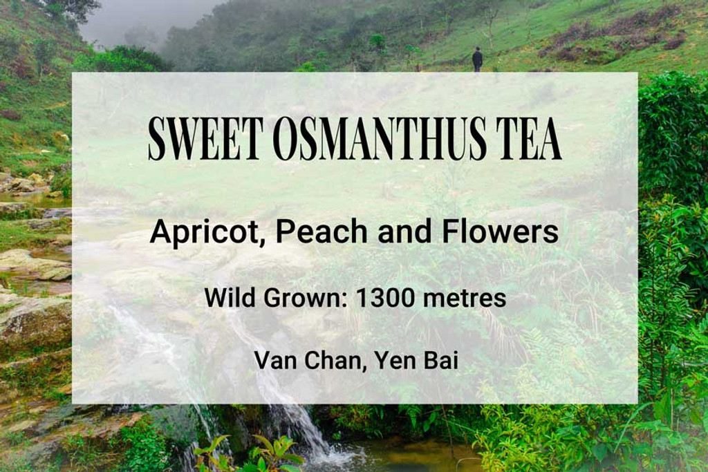 Sweet Osmanthus Tea