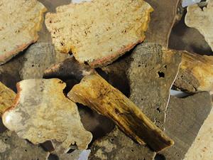 Tumble Stone Slice - Fossil Wood 250g