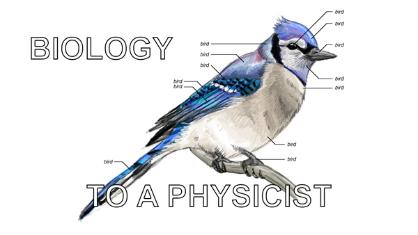 facebook-sj-bird-physicist.jpg