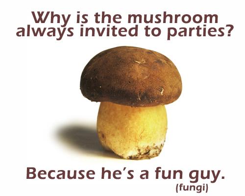 mushroom-fungi.jpg