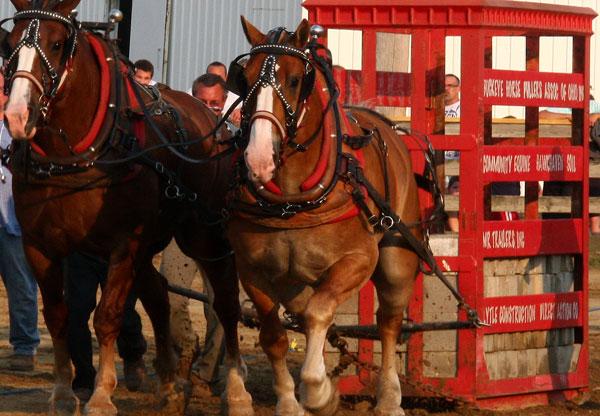 horse-pulling-geaugafair.jpg