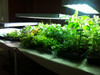 """EarlyGrow Over-sized  24"""" X 15"""" Tray Bed Seed & Herb Propagator with 2 Vented Height Extensions"""