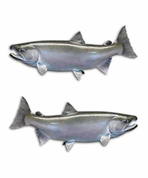 Coho Salmon Alaska Fishing Stickers Aftershock Decals