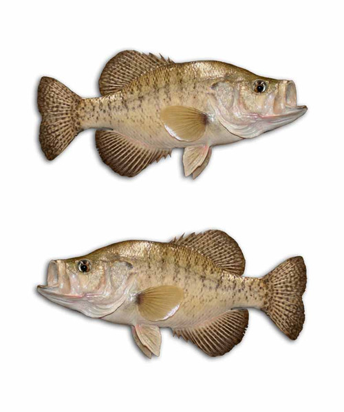 Crappie Fishing Stickers