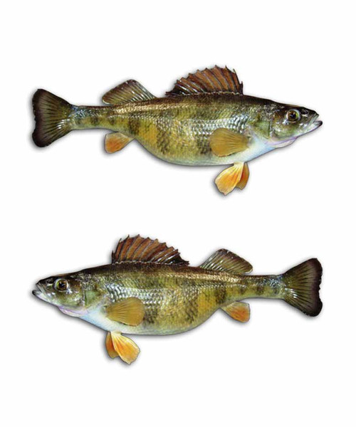 Yellow perch fishing stickers aftershock decals for Yellow perch fishing rigs