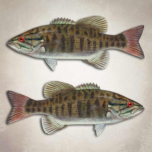 Smallmouth Bass Fishing Decal