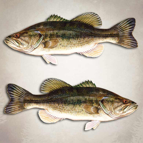 Largemouth Bass Fishing Decal