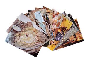 Honey Bee Study Prints
