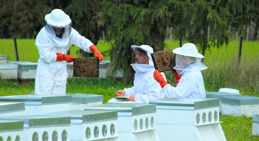 What to Look for When Checking your Hive.