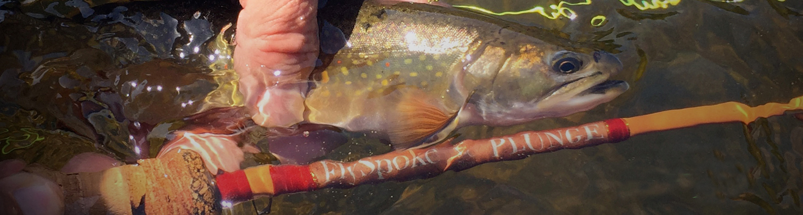 plunge-brook-trout1new.jpg