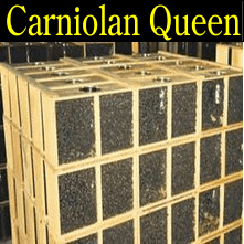 3 pound Carniolan honey packaged bees queen honey bee packages Iowa Minnesota Missouri Nebraska South Dakota North Dakota Wisconsin Illinois Kansas