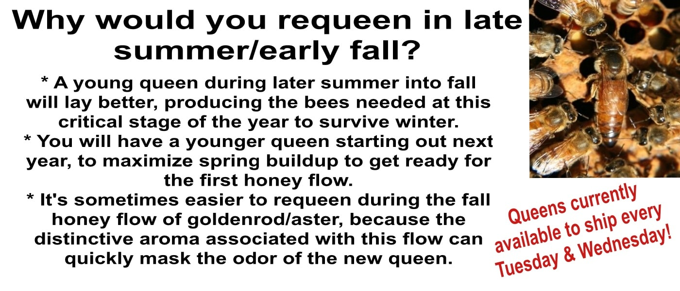 Insured shipped queen honey bees for sale 2018