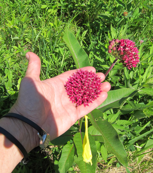 susan-lordi-flowers.jpg