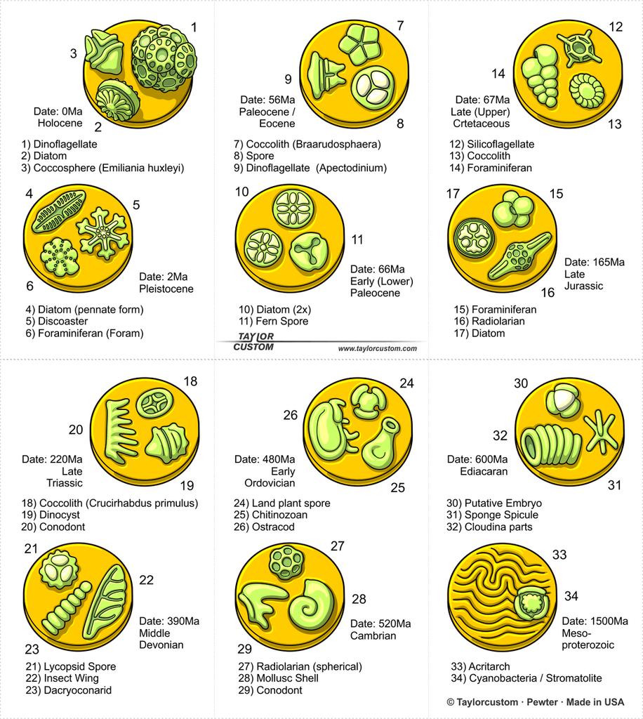 Micropaleontology Keychain packaging illustration