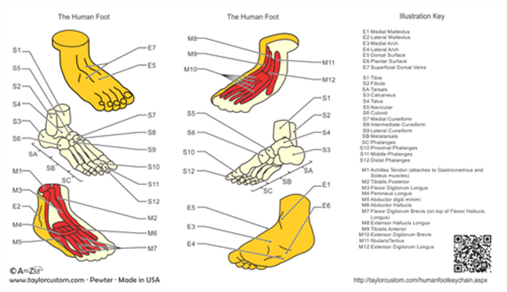 Anatomical Foot product packaging