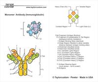 antibody keychain packaging