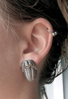 trilobite earrings