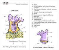 Coral Polyp Pendant