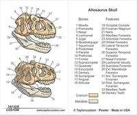 Allosaurus Skull Magnifier Packaging