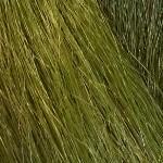 colorchart-hkk-pistachio.jpg